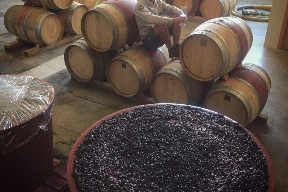 La Viticultura: un oficio en vías de extinción